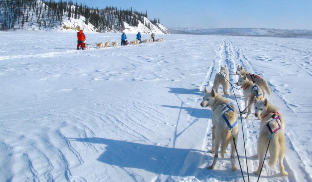 可愛らしいハスキー犬と一緒に気分爽快な走 りが楽しめる犬ぞり体験