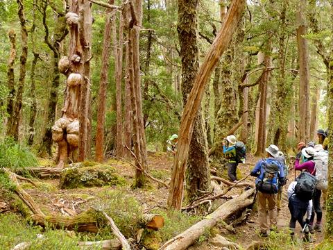 ユーカリの木々に埋もれる明るい森