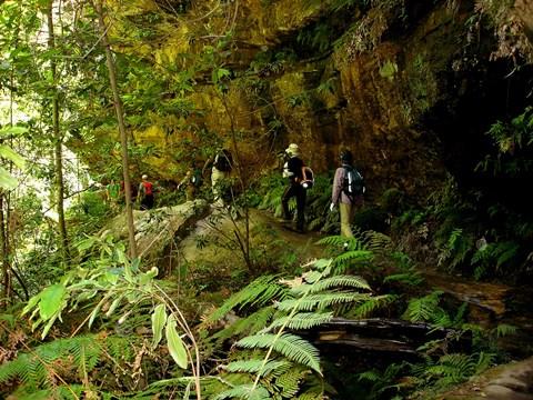 ブルーマウンテンズの峡谷内に分け入るハイキング
