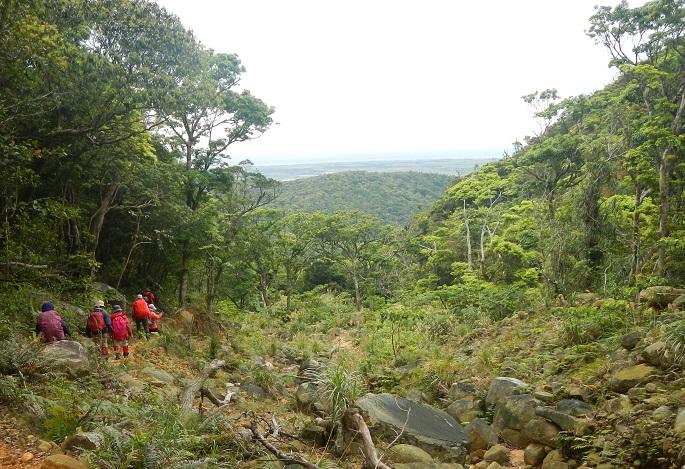 現地ガイドによる案内のもと、於茂登岳の樹林帯を行く