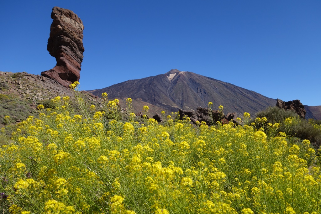 春色に染まるスペイン最高峰テイデ山の雄姿