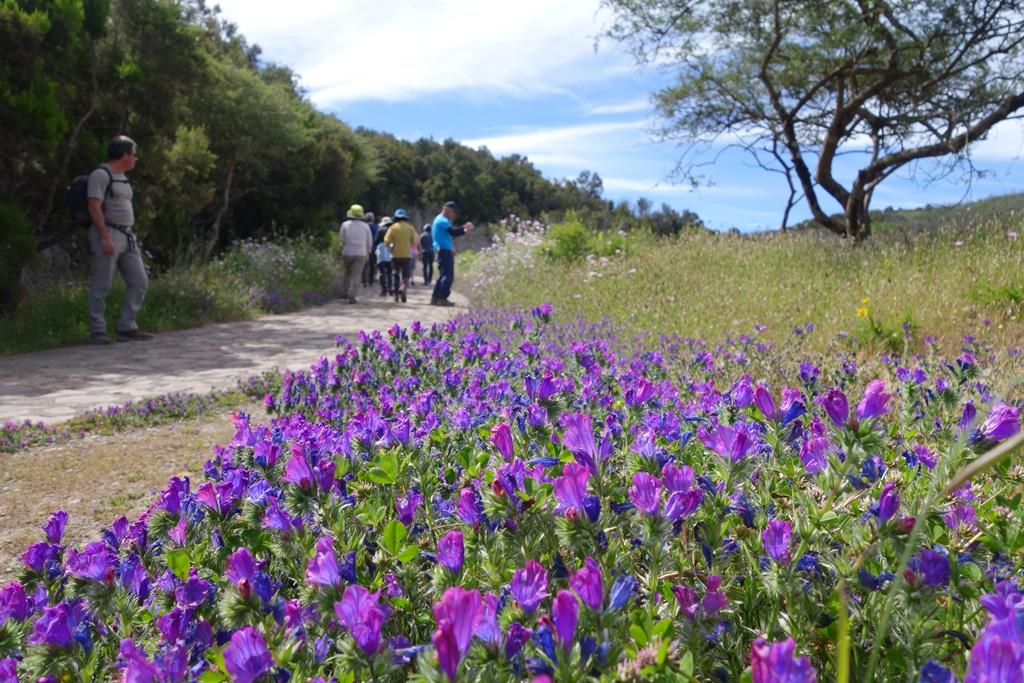 花咲く春のゴメラ島