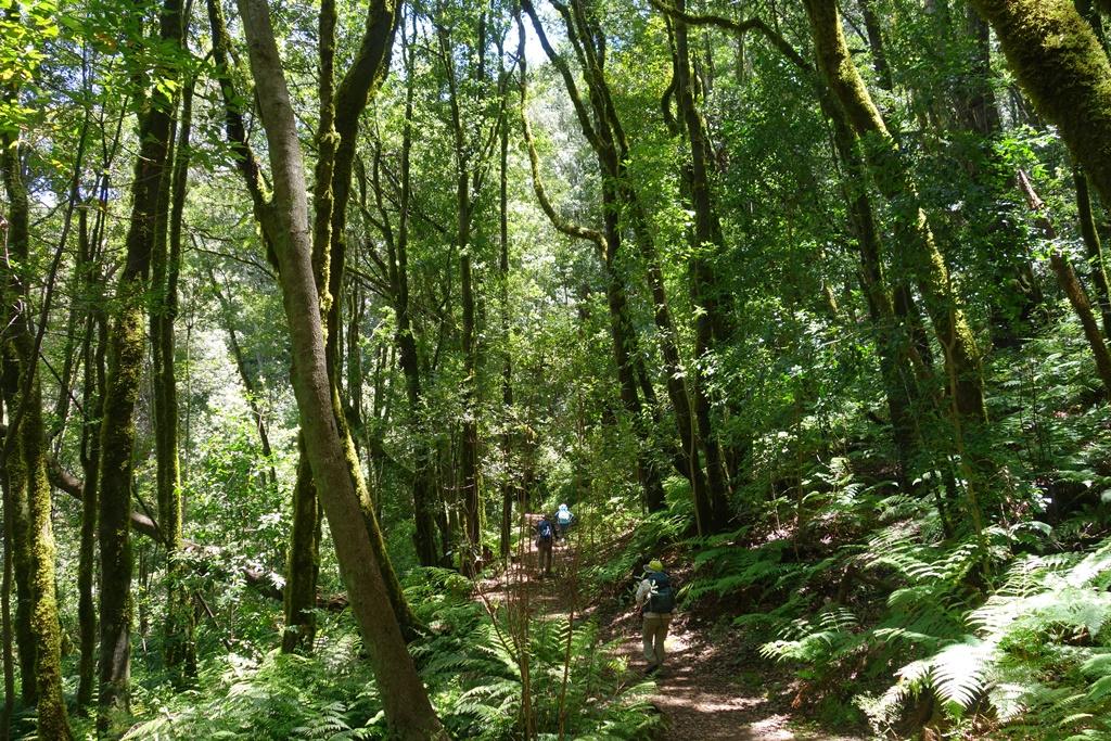 ラウリシルバの森