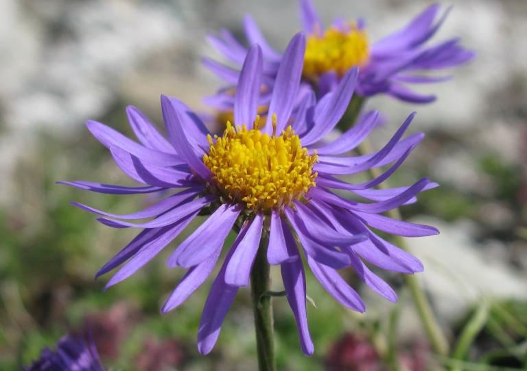 足元を彩る花や高山植物も楽しみ