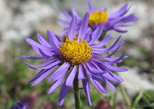 花の多いシーズンに訪問