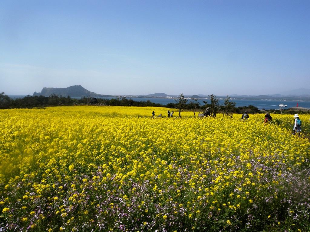 菜の花咲く牛島(ウド)でのんびりハイキング