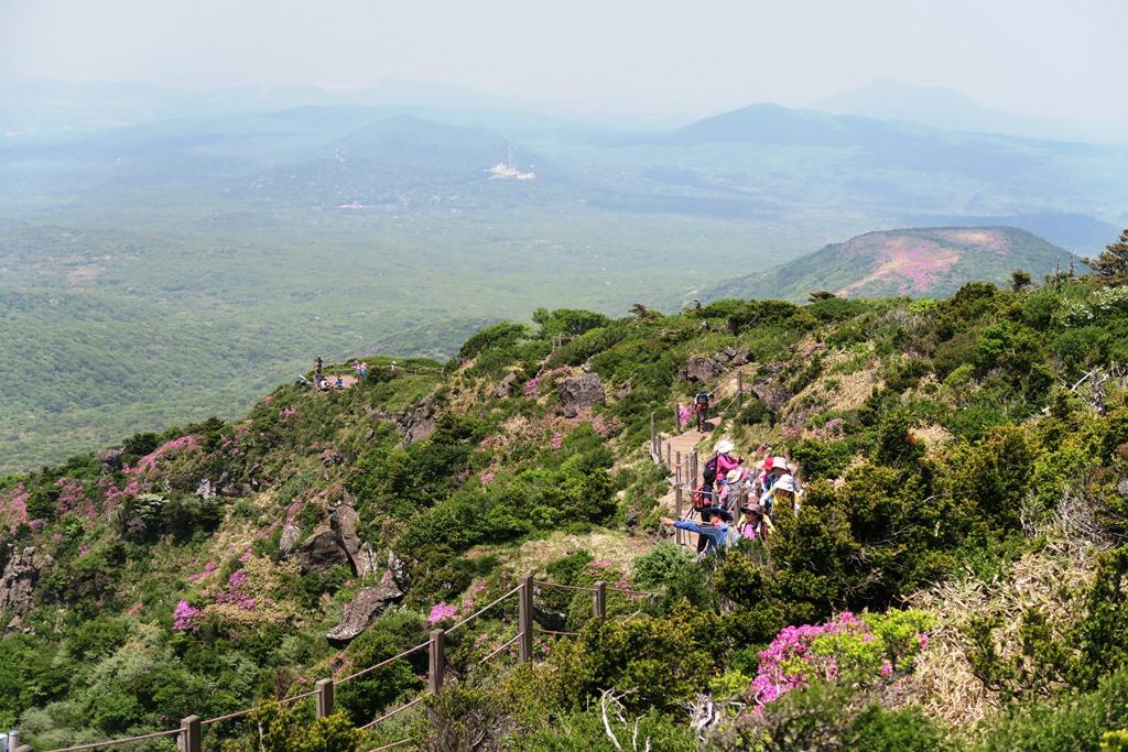 ツツジ咲く漢拏山西壁展望ハイキング