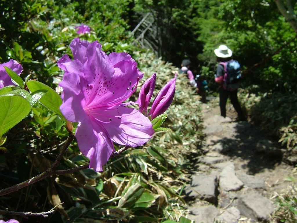 春には登山道に咲くツツジが彩りを添えます