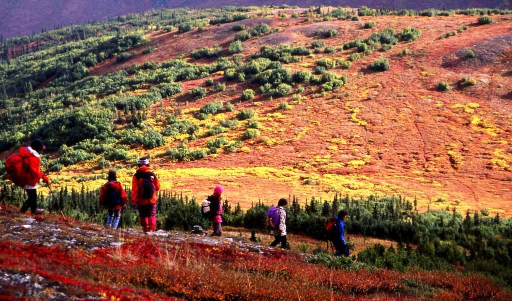 デナリ山麓の秋。紅葉と黄葉のコントラストが素晴らしい