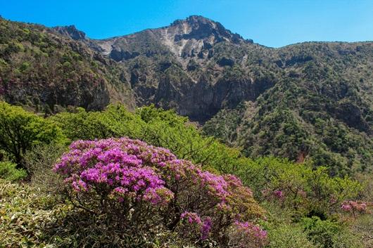 ツツジ咲く韓国最高峰・漢拏山