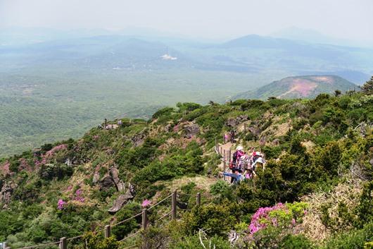 ツツジ咲く漢拏山西壁展望ハイキング(オプショナルツアー)