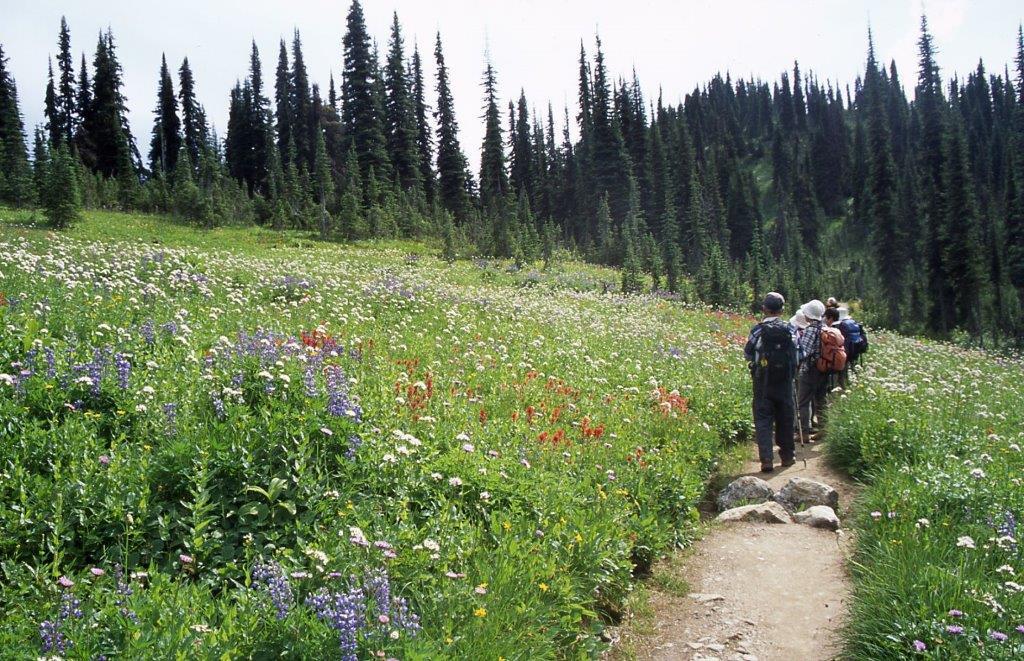 レベルストーク国立公園では高低差の少ないコースが主体