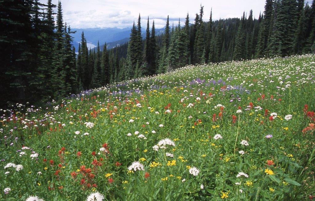 レベルストーク国立公園の密度の高いお花畑