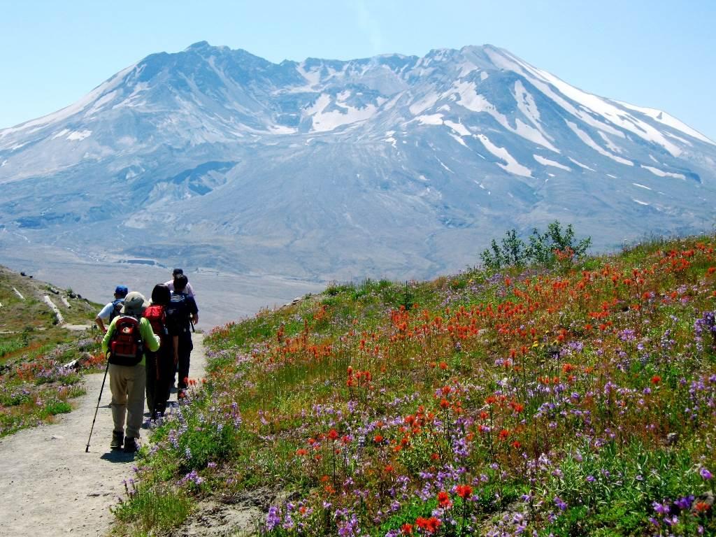 花々咲くセントヘレンズ火山