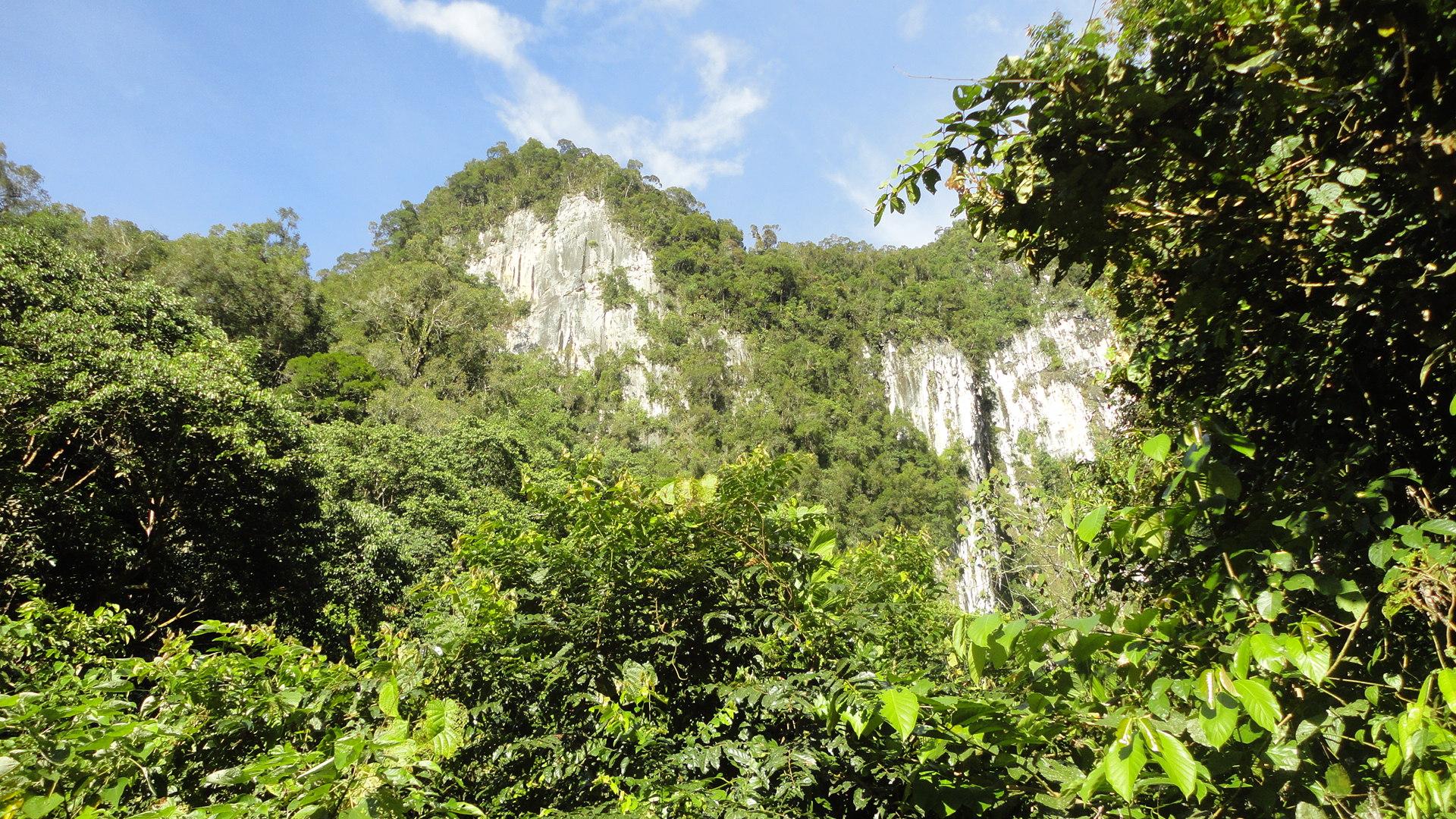 熱帯雨林の深い森に多くの洞窟が隠れているムル国立公園