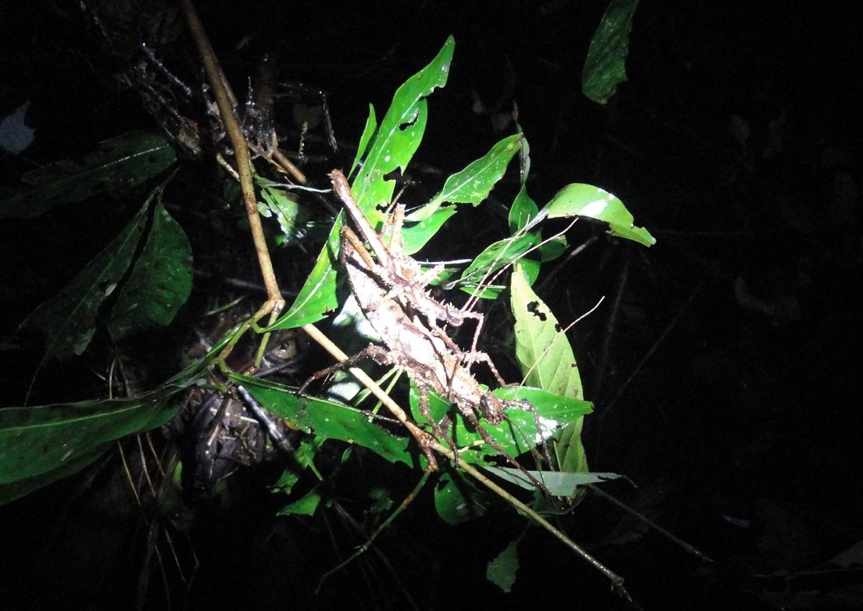 ナイトウオークでは珍しい昆虫にも出会える