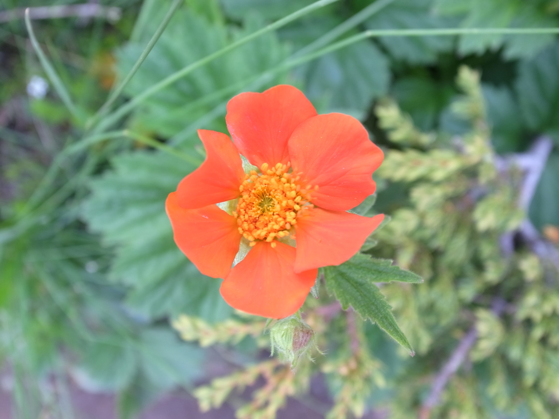色とりどりの花がブルガリアの夏山を彩る