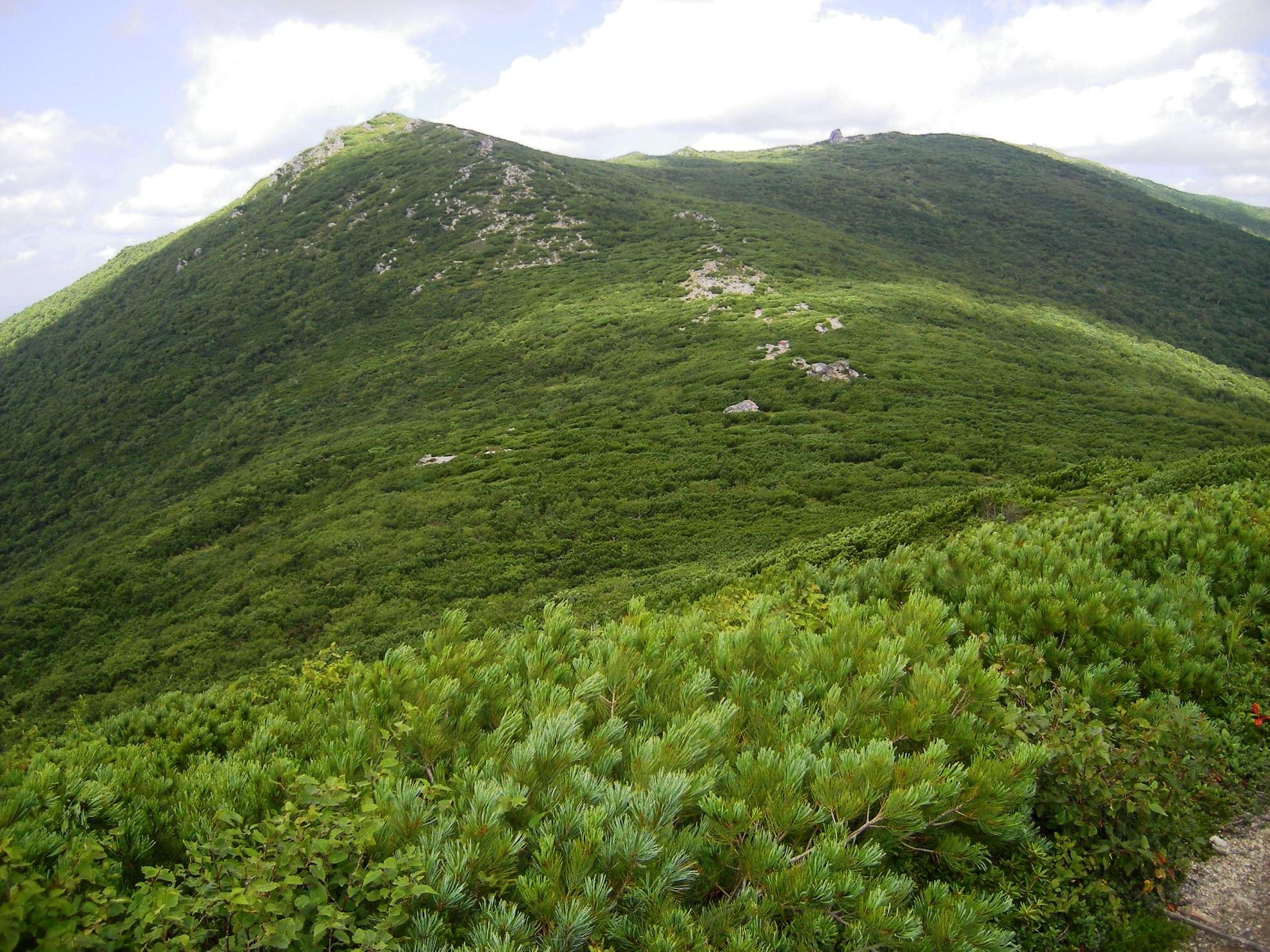 チェーホフ山は高山植物の宝庫