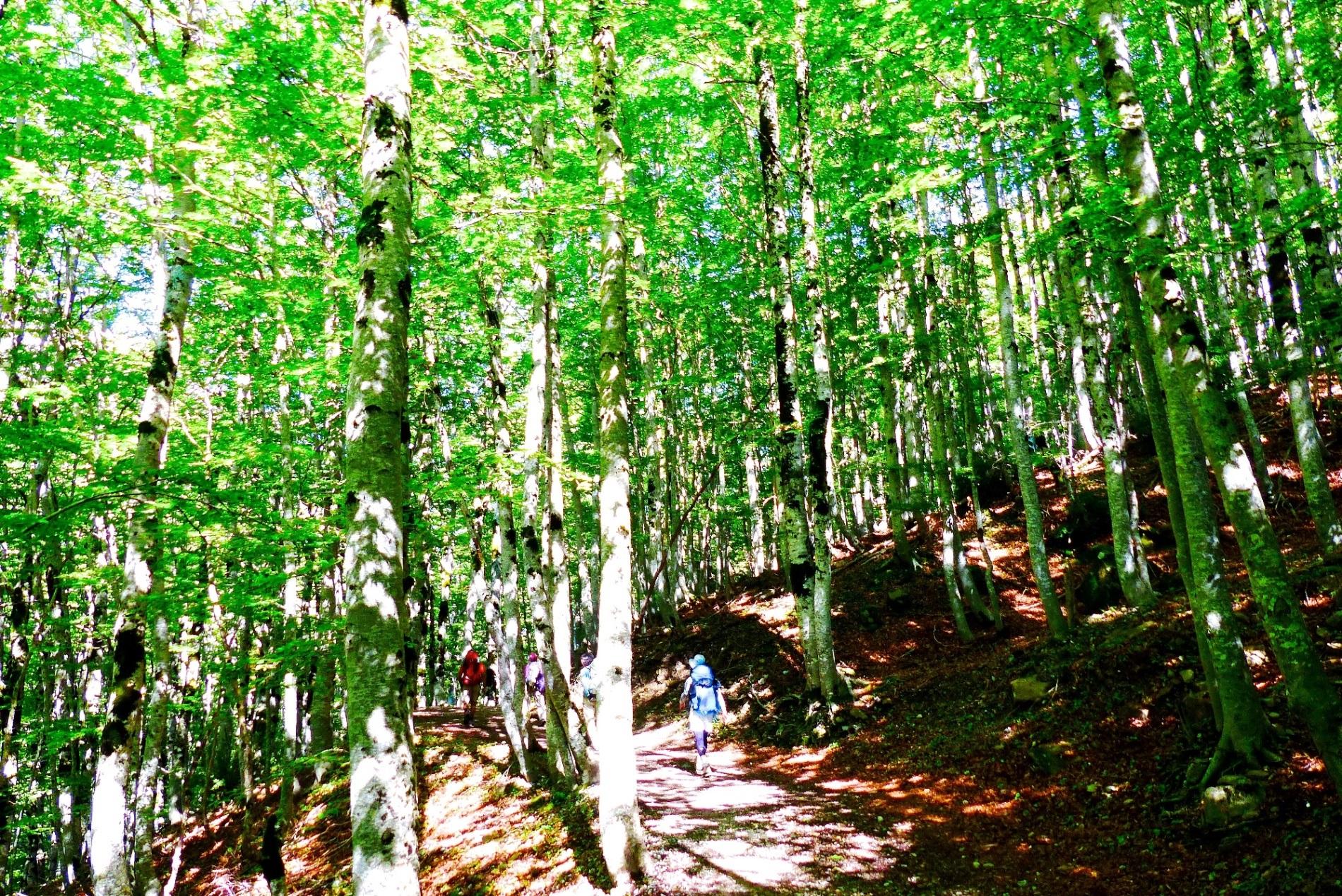 美しいブナ林のあるオルデサ渓谷(7日目)