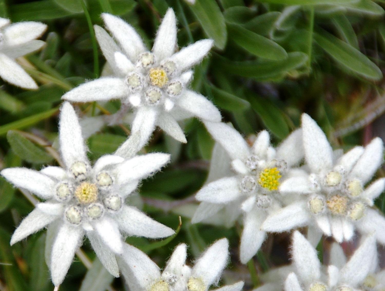 ピレネーの夏を彩る花々