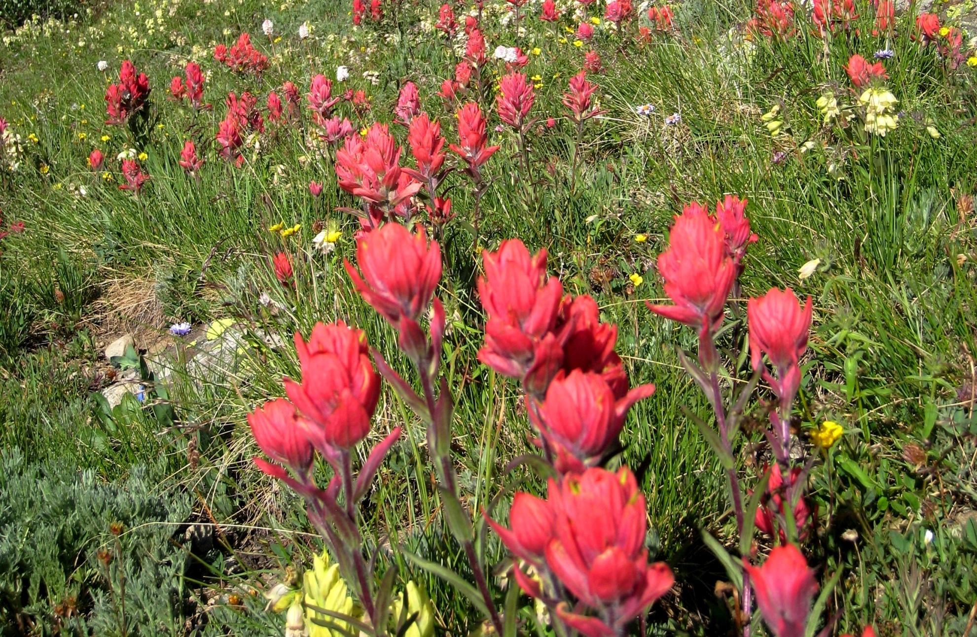 山麓にお花畑が広がるトレイズピーク