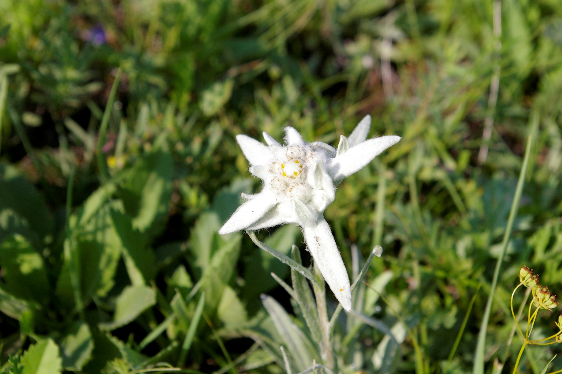 夏には多くの高山植物が見られる