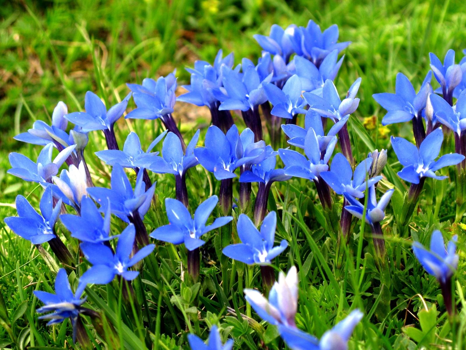 アルプスを彩るたくさんの花々を楽しむ