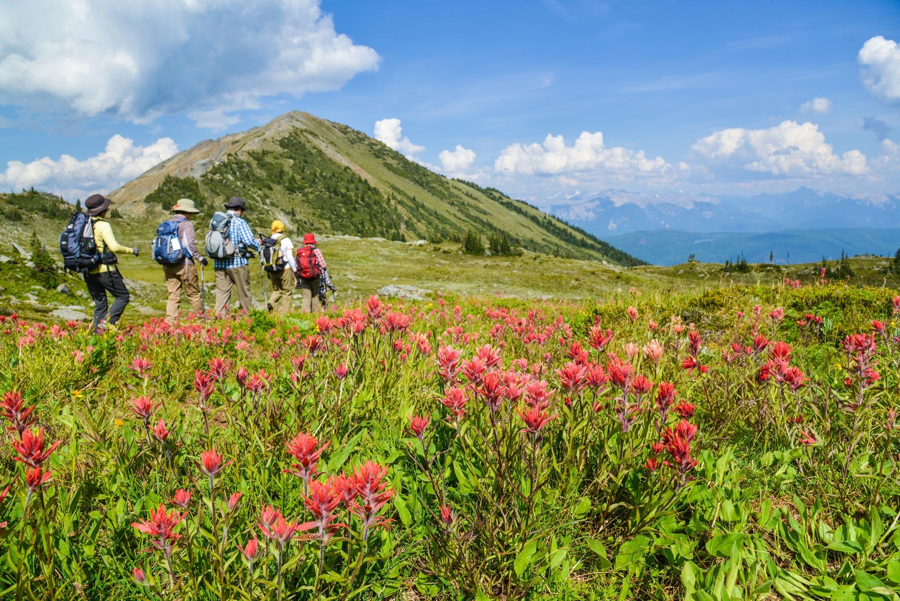 7月下旬から8月上旬はカラフルな花が咲く