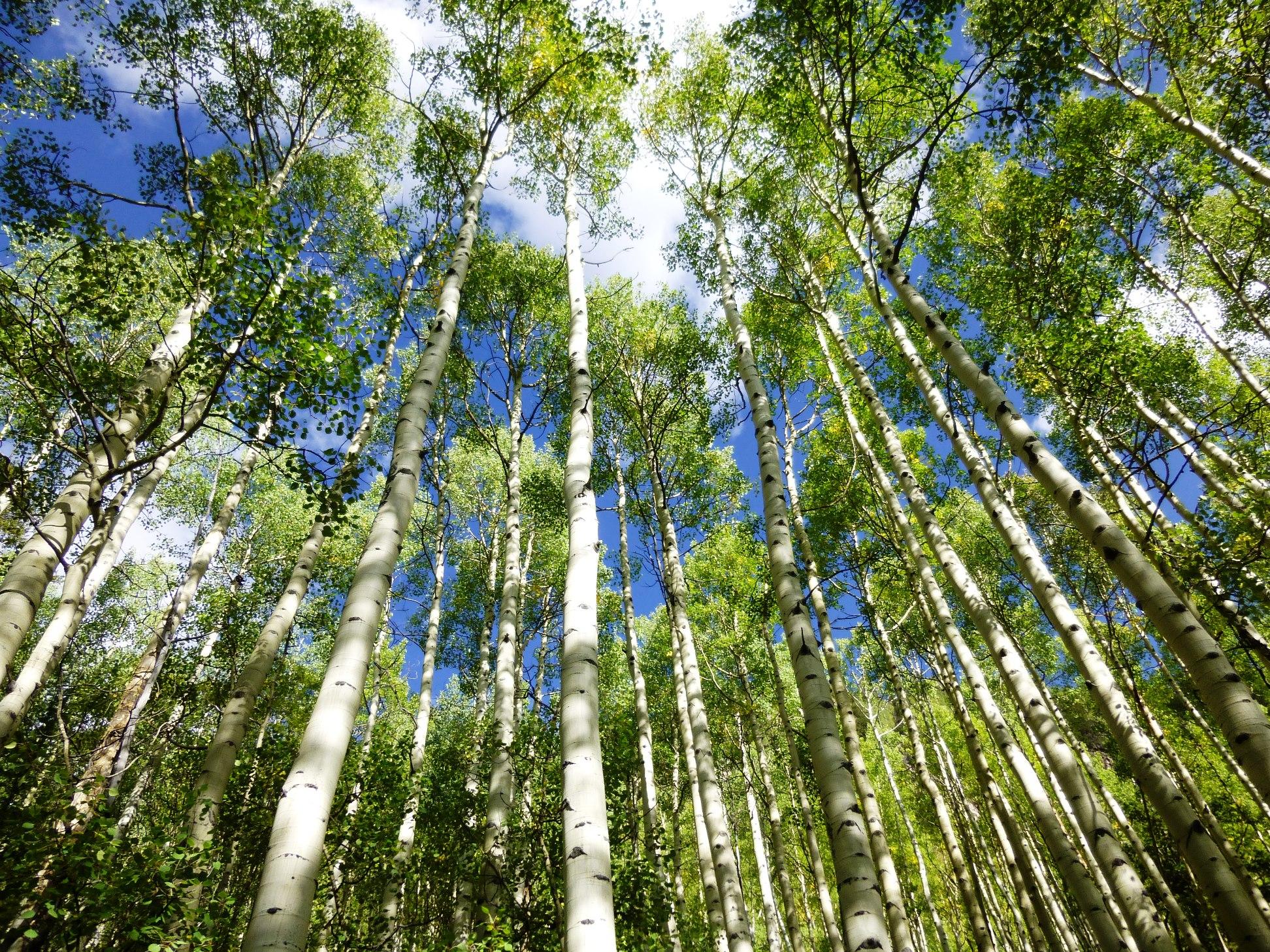 麓にはアスペンの美しい森が広がる