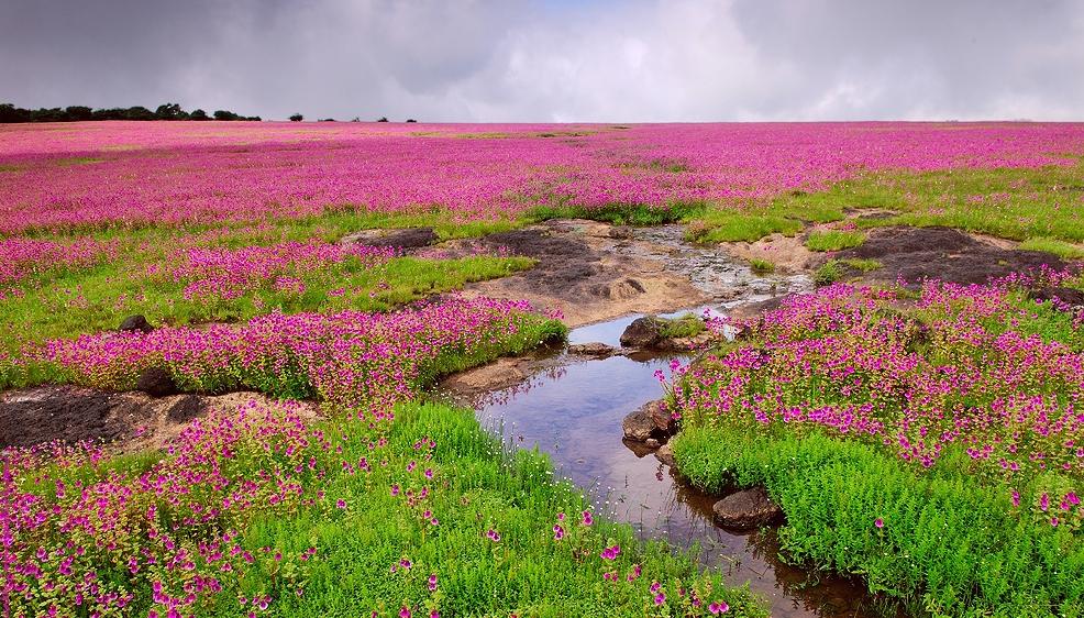 雨季明けの限られた季節に咲く花々