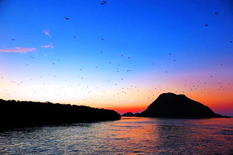 カロン島のコウモリの群れ(3日目)