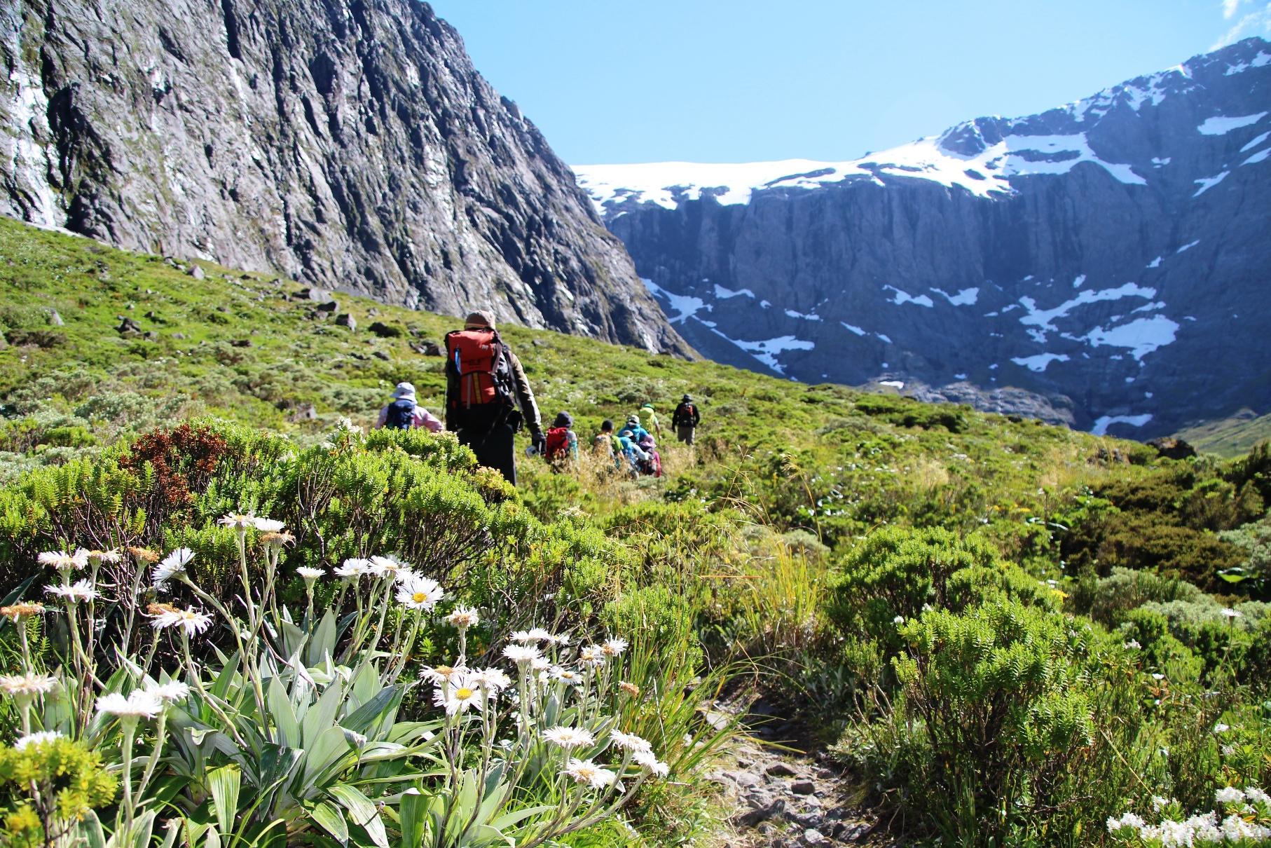 ニュージーランド固有の可憐な花たちを愛でながらハイキングを楽しむ