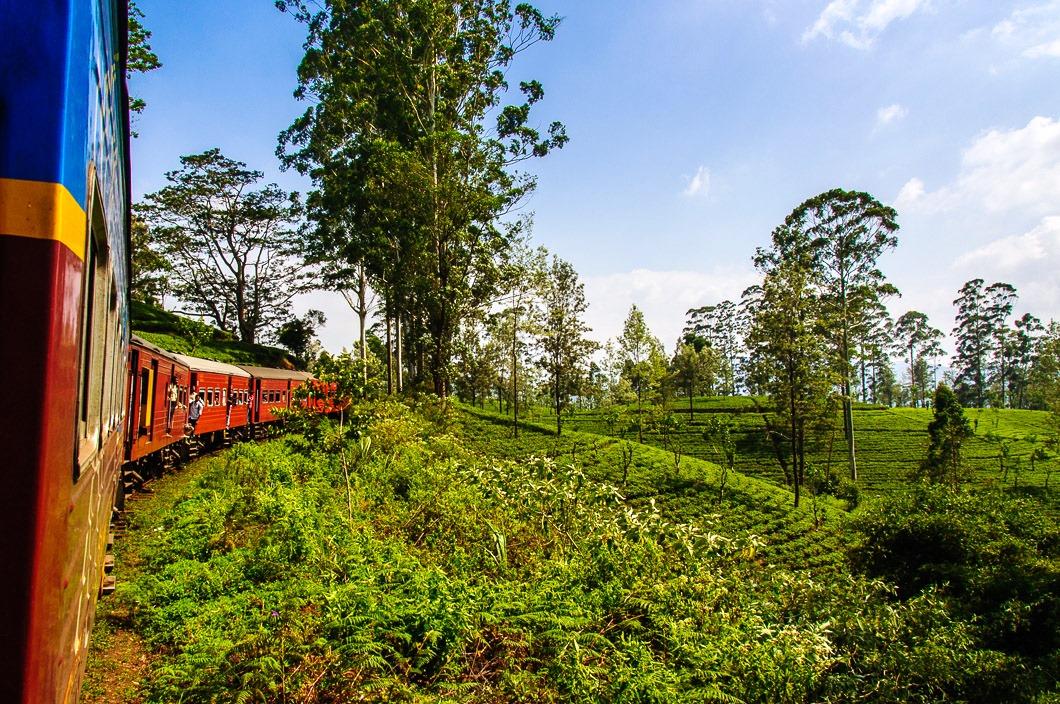 紅茶畑の中を進む高原列車(3日目)