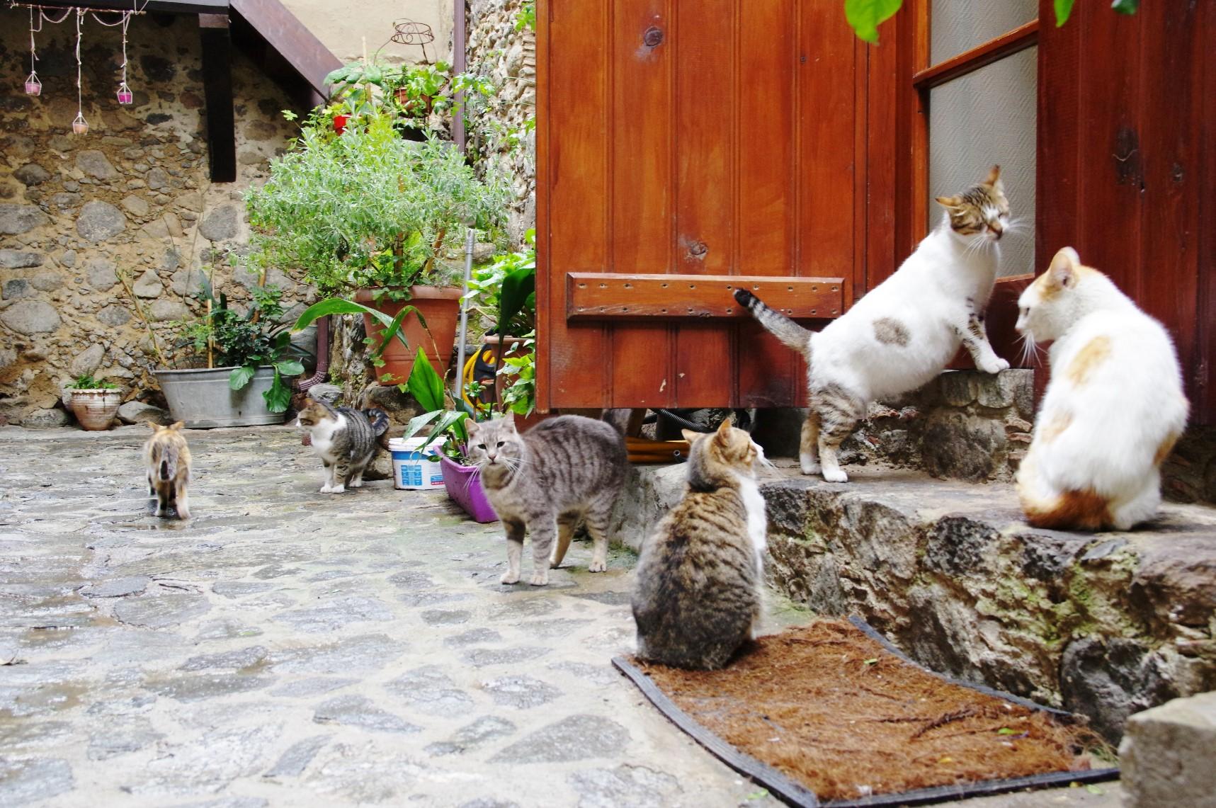 カコペトリアの山村で出会った愛らしい猫たち