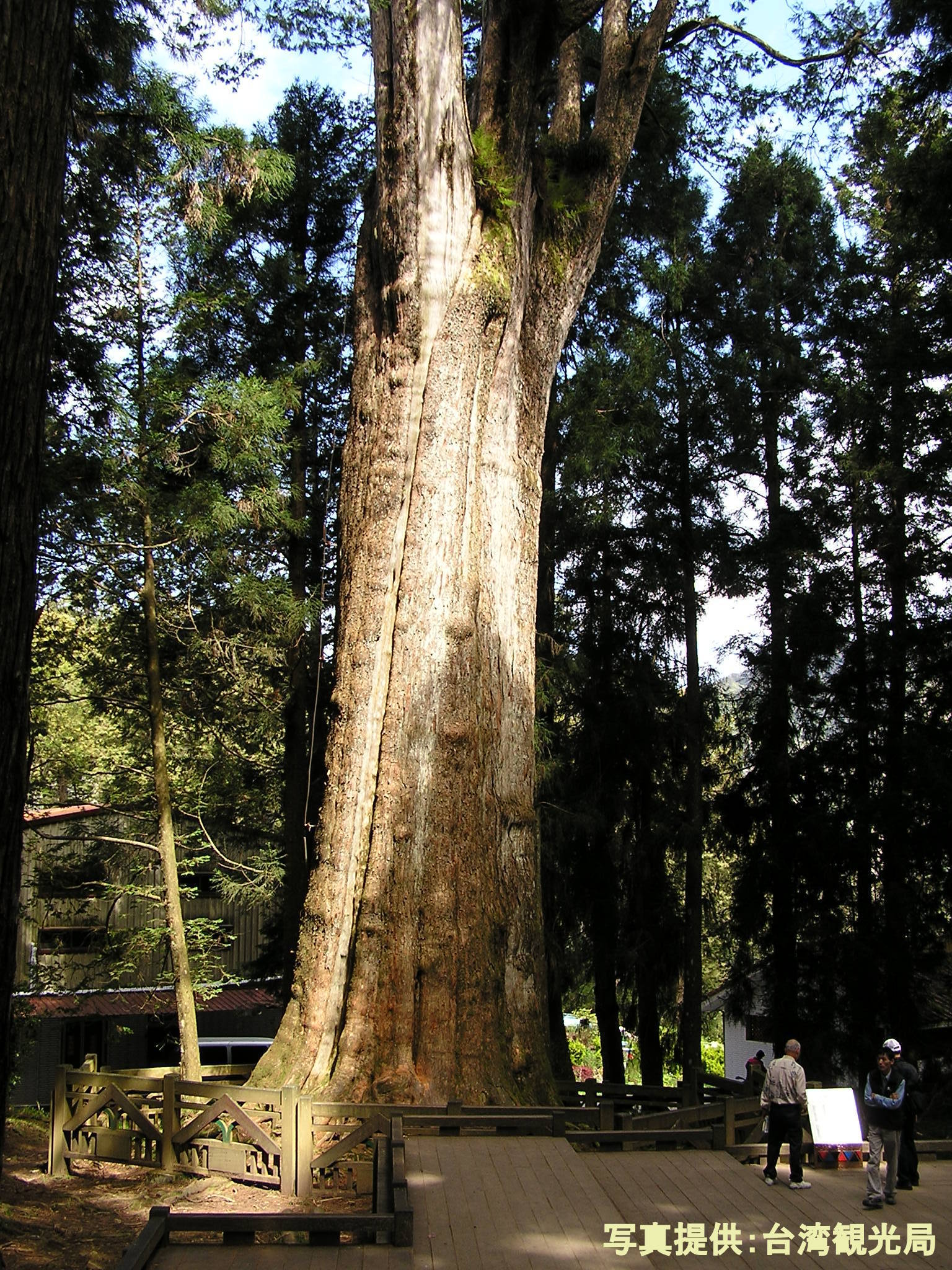 樹齢1000年を超える御神木が見られる森