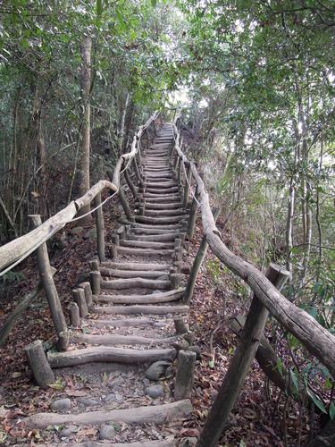 丸太で整備されたトレイルを歩く大坑登山歩道