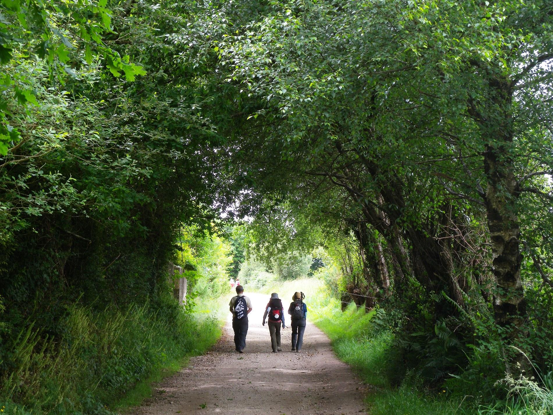 森の中の巡礼路をモンテ・デ・ゴーゾの丘へ(7日目)