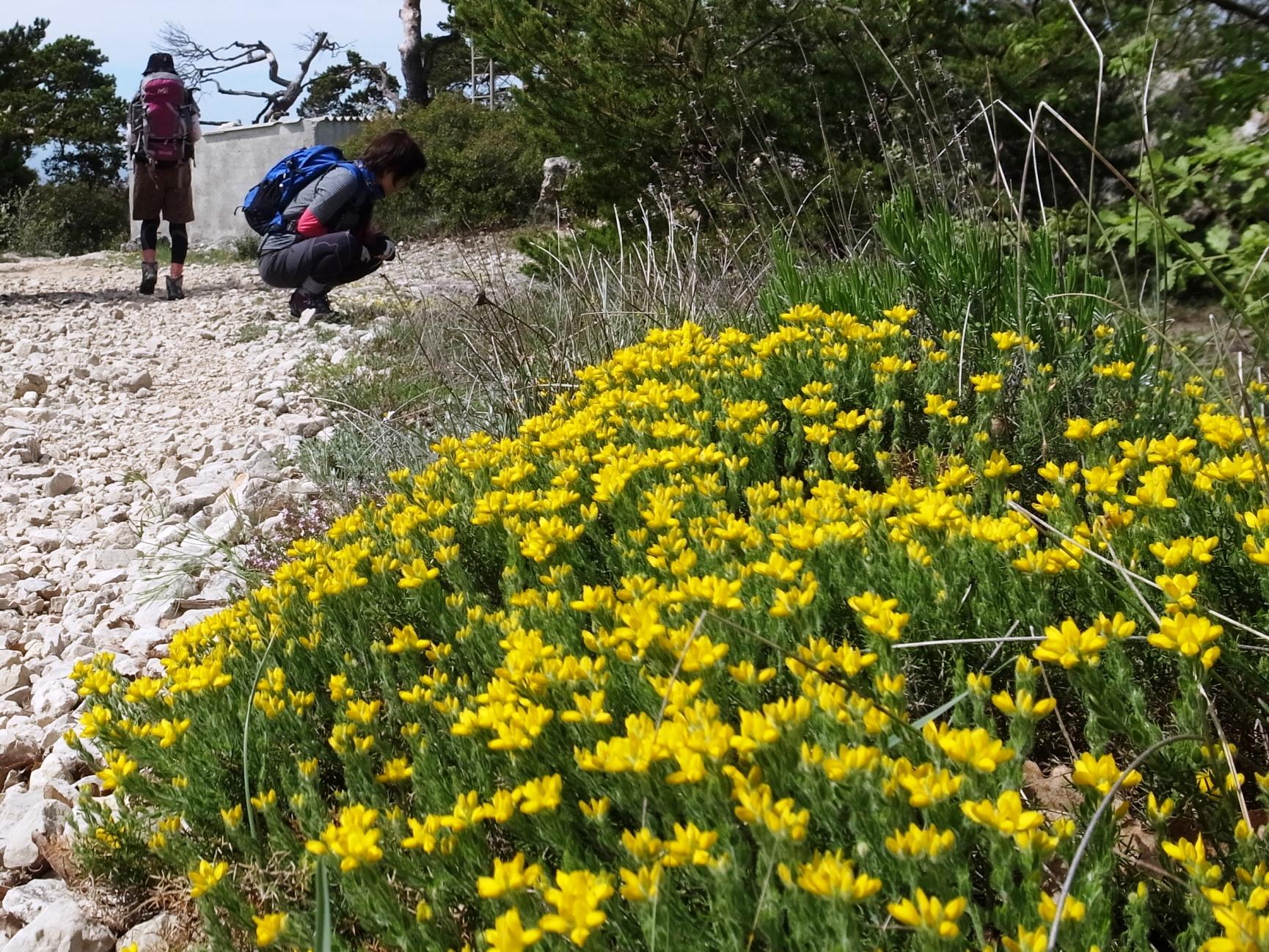トレイルには花が咲く