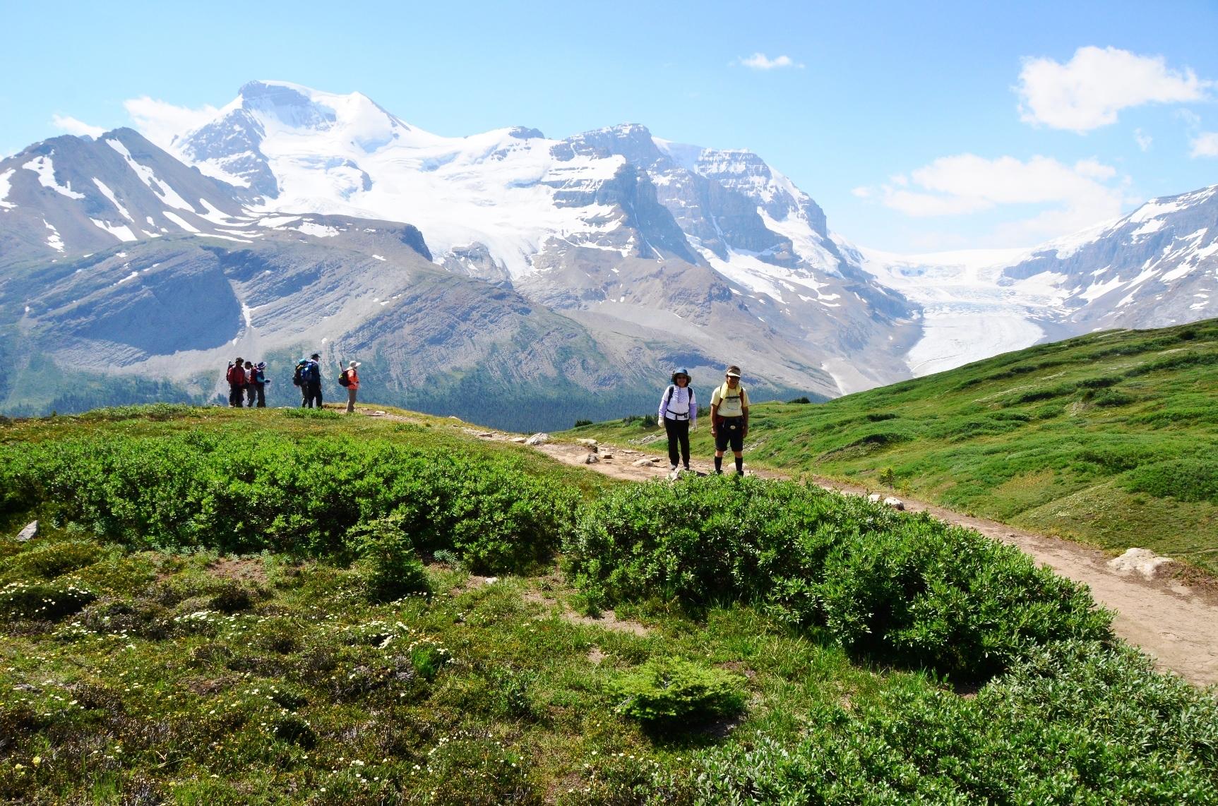 アサバスカ氷河と迫力の山々の展望が広がるウィルコックスメドウにて(4日目)