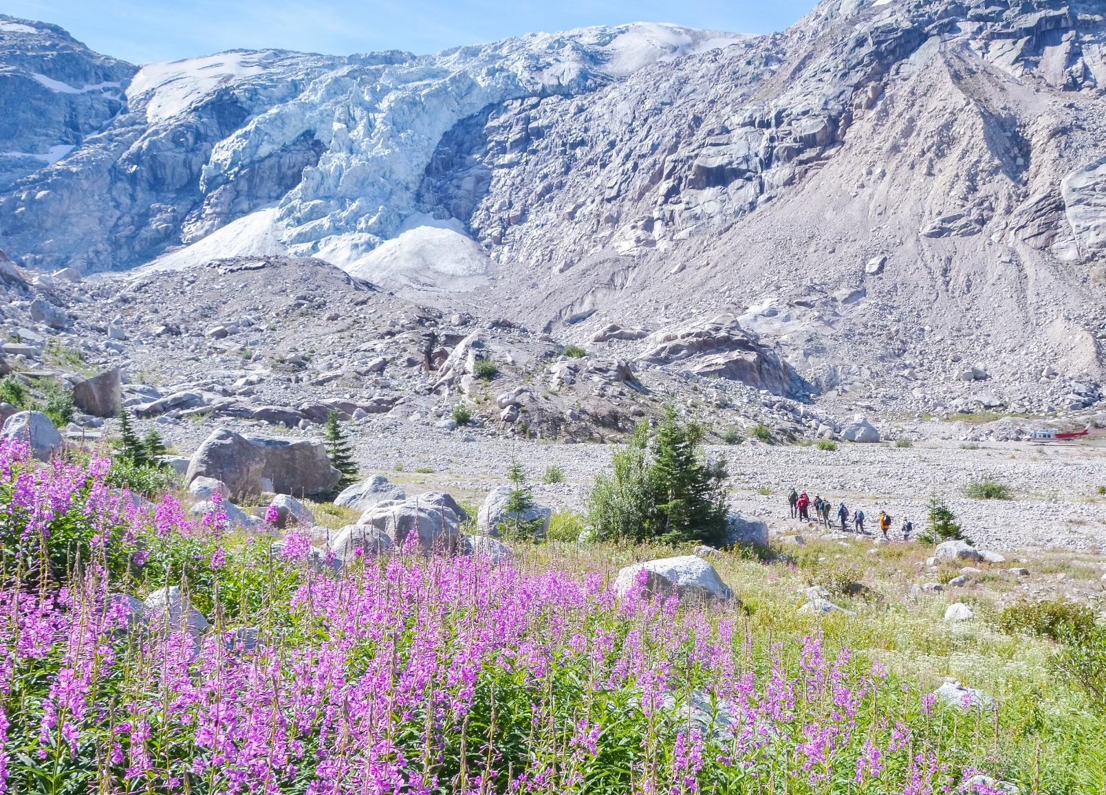 巨大な懸垂氷河と高山植物が咲く山上の別天地を独占して歩く贅沢なひととき(ボビーバーンズ)