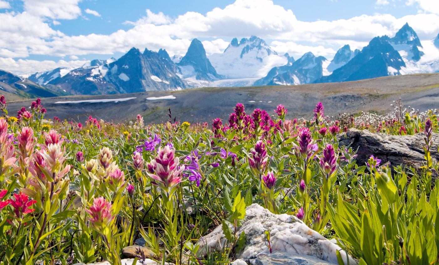 雄大な山々と花々の絶景が広がるバガブー山群