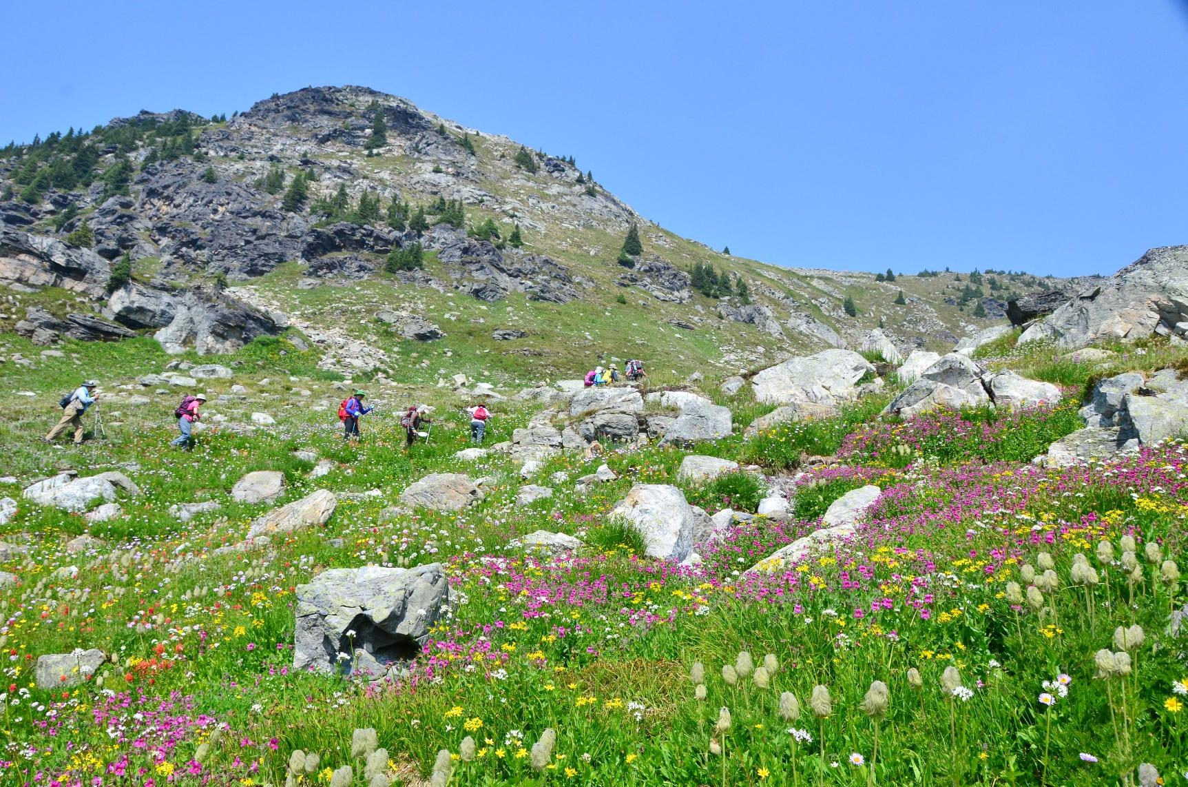 山小屋を起点に花を愛でる日帰りハイキングへ(5日目)