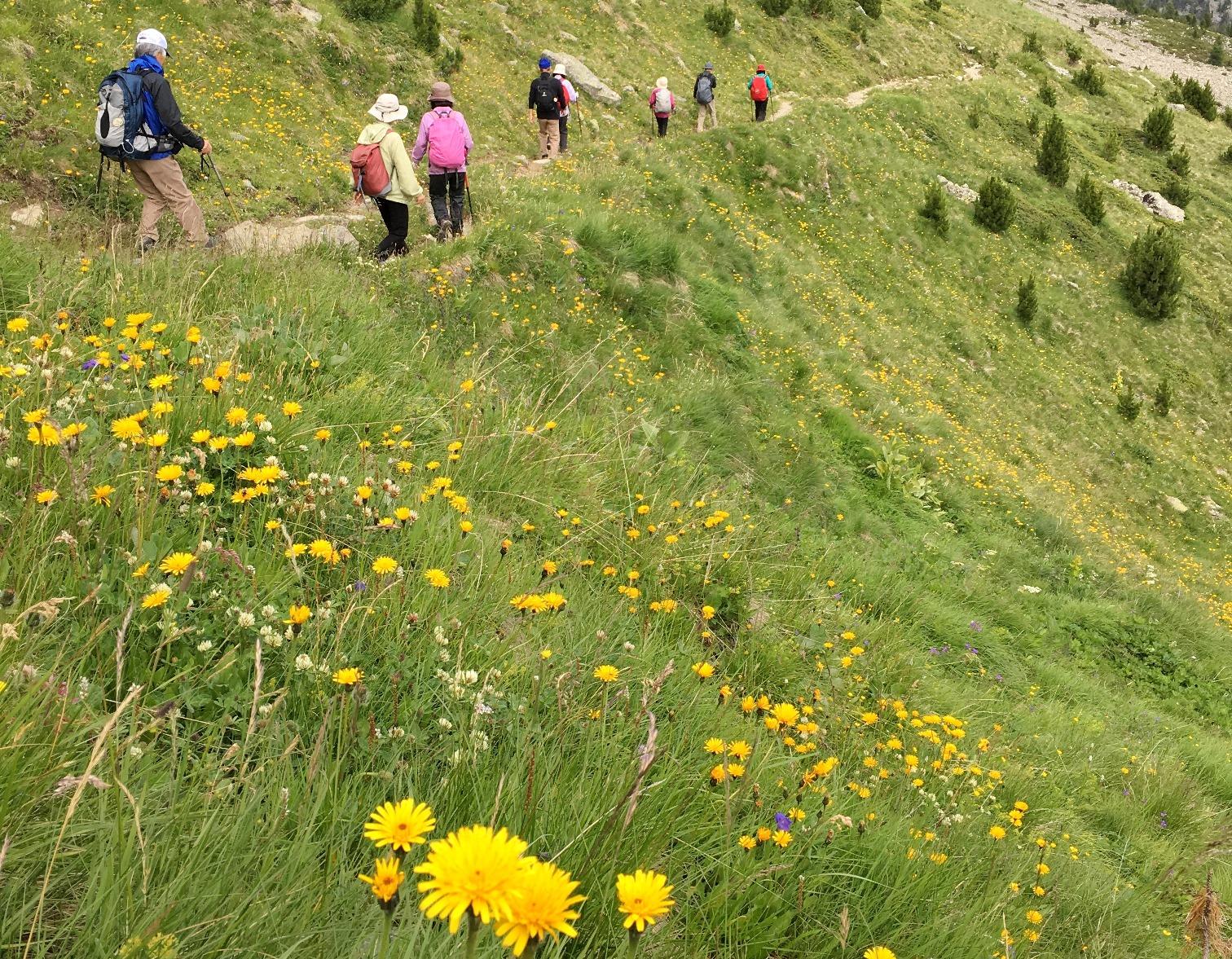 花咲くスイス・アルプスを歩く(3日目)