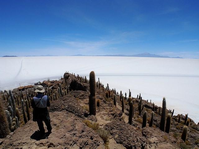 インカ・ワシ(インカの家)島から望むウユニ塩湖。見渡す限り白い世界が広がる
