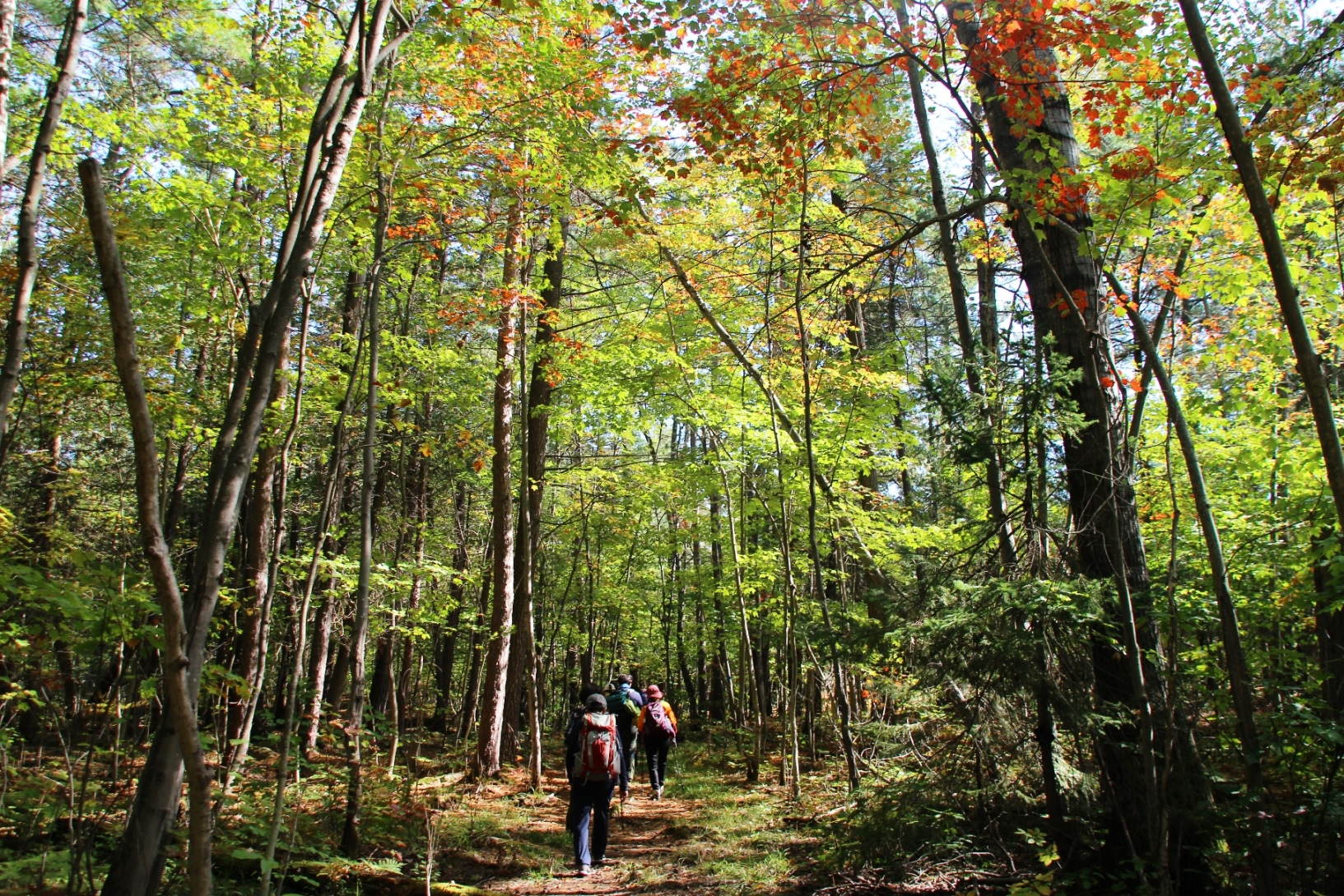 キラニー州立公園の森をハイキング(5日目)