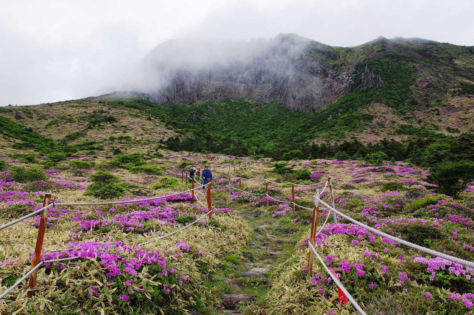 漢拏山の南壁が迫る南麓のコースを下る(2日目)