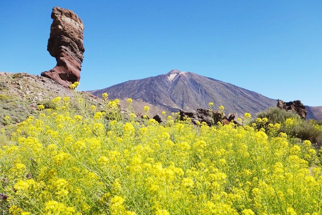 春色に染まるスペイン最高峰テイデ山の雄姿(4日目)