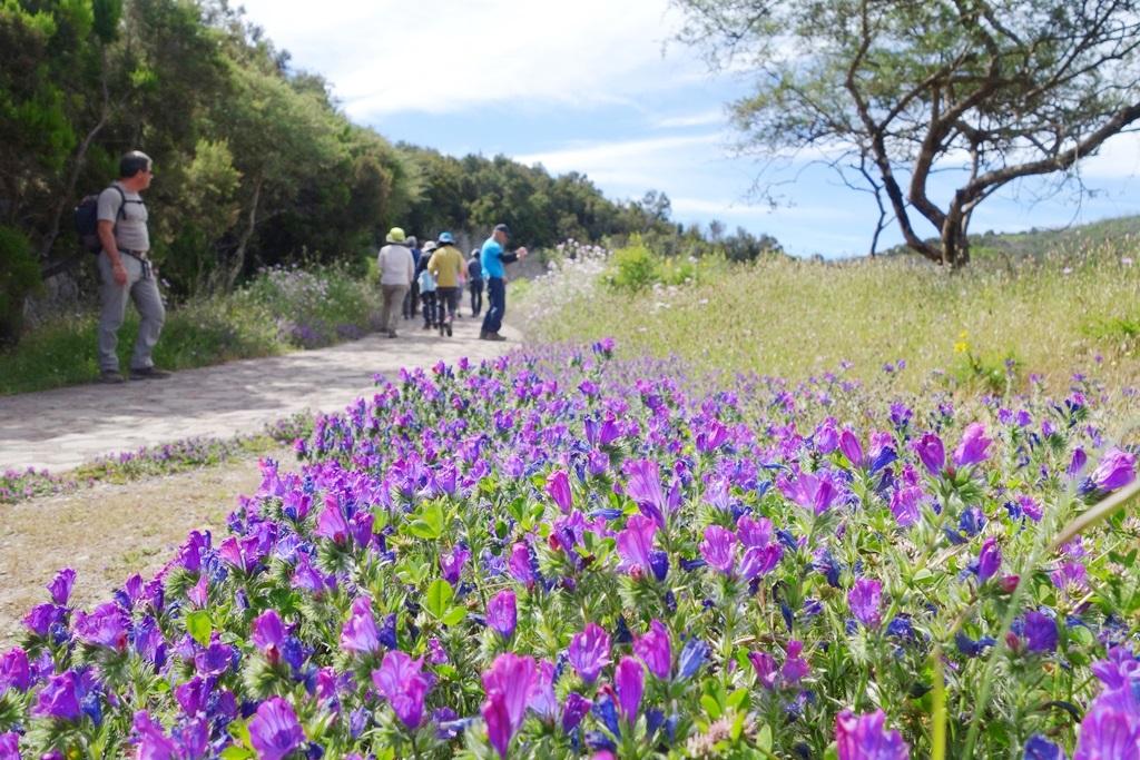 花咲く春のゴメラ島(6日目)