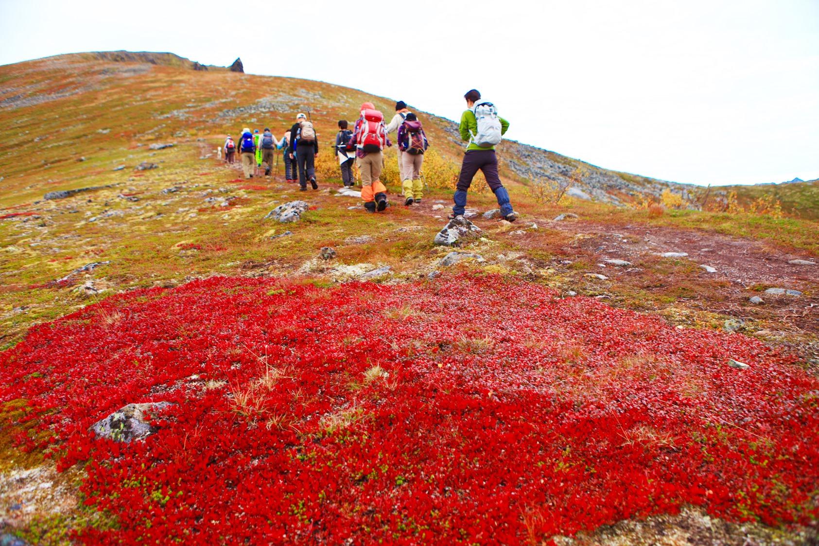 真っ赤に染まるウラシマツツジの葉