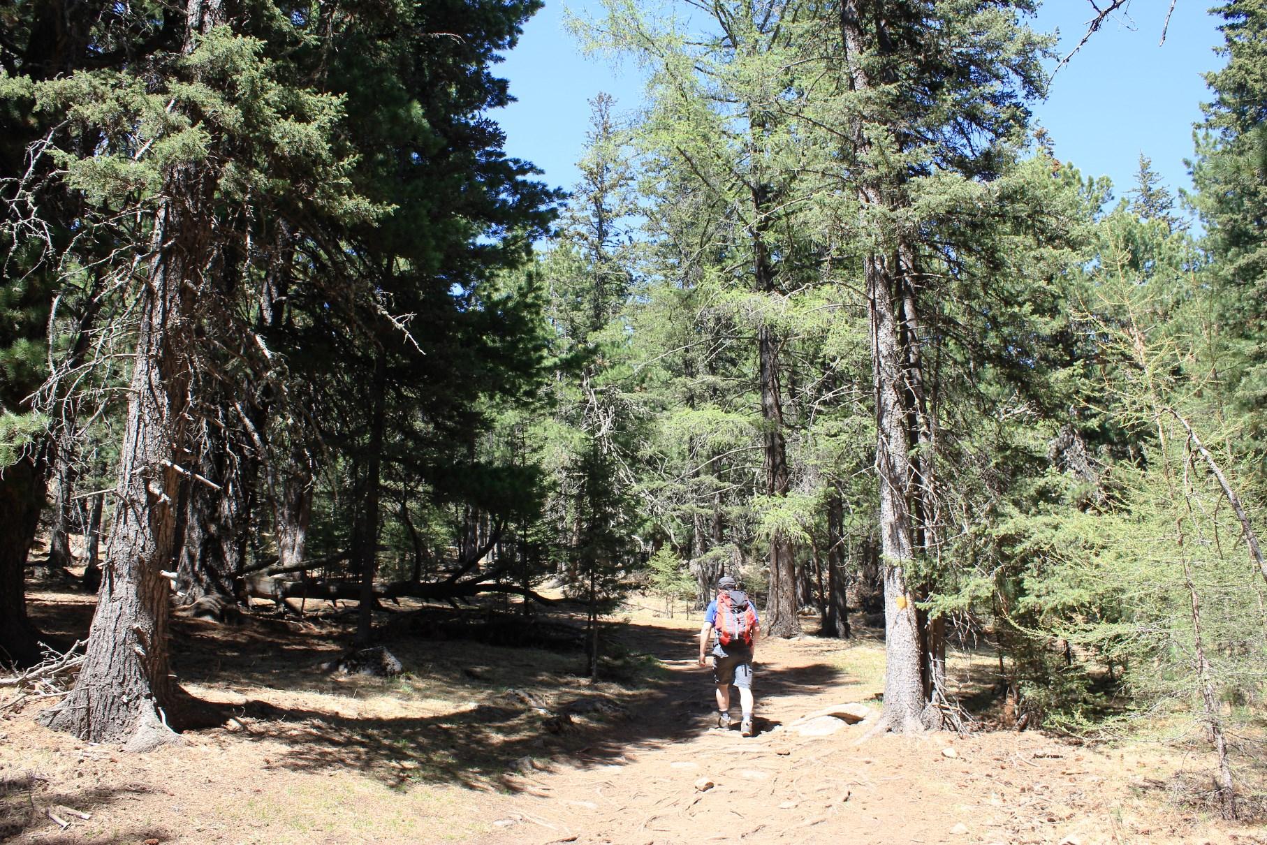 ツェツェグン峰は樹林帯を進む